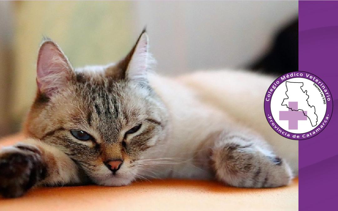 Informe de la AAIV sobre susceptibilidad de animales domésticos al SARS-COV-2