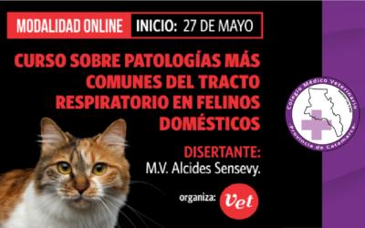 Curso online sobre patologías más comunes del tracto respiratorio en felinos domésticos
